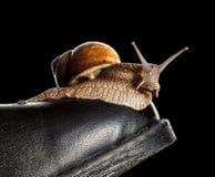 Slow snail on boot toe Stock Photos