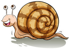 A slow snail Stock Photography