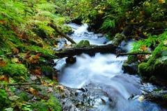 Slow stream in Autumn. Stock Image