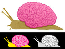 Slow thinking snail brain Royalty Free Stock Photo