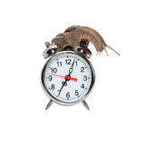 Slow Time. Time concept. Snail on the alarm clock. Isolated on white with clipping path stock photo