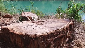Slow tree stump in Forest Caminito del Rey 01. Slow Motion Dolly Tracking In towards stump in front of turquoise river in Caminito del Rey stock footage