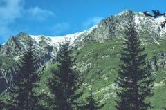 Slowakische Karpatenberge im Herbst grüne Hügel mit Oberteilen Lizenzfreie Stockfotos