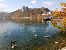 Slowenisch ausgebluteter See stockfotografie