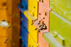 Slowenisch Bienen-Bienenstock Lizenzfreie Stockfotografie