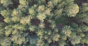 Slowly drone shot aerial straight down top view fly over mixed. Drone shot aerial straight down top view fly over mixed forest and trees in sunny spring season stock footage