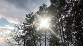 Slowly rising aerial shot amongst trees with sun shining through. Lens flares, beautiful sunrise. Lush pine trees. Slowly rising aerial shot amongst trees with stock video footage