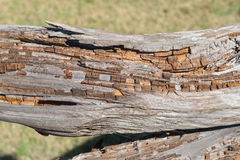 A slowly rotting log Royalty Free Stock Photography