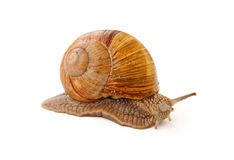 Slowly snail Stock Images