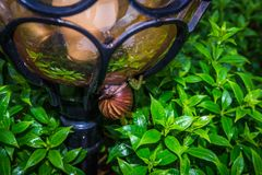 A slowly snail sleep under the lamp. In a plant bush Royalty Free Stock Images