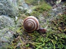 Snail Traveler stock photos