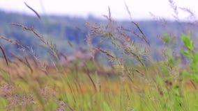 Slowmo wiatr przez trawy