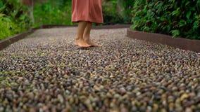 Slowmotion съемка молодой женщины идя на reflexological путь в тропическом парке видеоматериал