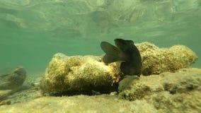Slowmotion Podwodny rybi Asia Thailand zwierzę rybi, nadwodny, błękitny, ocean, rafa, morze, tropikalny, woda zdjęcie wideo