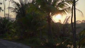 Slowmotion punkt widzenia strzelał piękna tropikalna droga z drzewkami palmowymi i jezioro za drzewami podczas zmierzchu zbiory