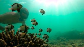 Slowmotion schot die van de mens in een tropische overzees snorkelen om een koraalrif met overvloed van tropische vissen te zien stock footage
