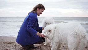 Slowmotion shot of attractive young woman plays with two dogs of the Samoyed breed by the sea. White fluffy pets on the. Beach having fun. Beautiful sky on the stock video