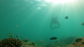 Slowmotion shot of man snorkeling in a tropical sea to see a coral reef with plenty of tropical fish stock footage