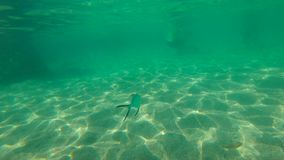 Slowmotion shot of a tropical fish swimming in a sea.  stock footage