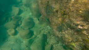 Slowmotion shot of a tropical fish swimming in a sea.  stock video