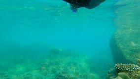 Slowmotion shot of a young man snorkeling and diving dip into sea.  stock video