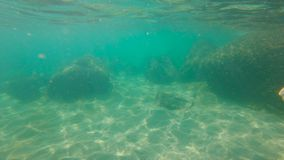 Slowmotion shot of a young woman snorkeling in a sea. Slowmotion shot of a young woman snorkeling in a sea stock footage