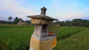 Slowmotion skott av en litet fälttempel eller hus av andar på en stor risfält på den Bali ön arkivfilmer