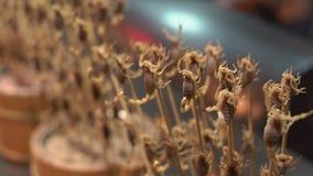Slowmotion skott för Closeup av massor av skorpioner som strängas på en bambupinne Lopp till det Kina begreppet Exotiskt matbegre arkivfilmer