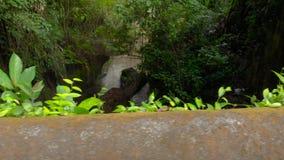 Slowmotion steadicam schoss von einem tropischen Fluss durch den Pura Gunung Lebah-Tempel in Ubud auf der Bali-Insel stock video footage