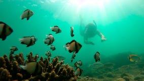 Slowmotion strzał snorkeling w tropikalnym morzu widzieć rafę koralową z obfitością tropikalna ryba mężczyzna zbiory wideo