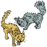 Slåss för katter Royaltyfri Bild