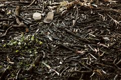 Sludge. Polluted river with rubbish Stock Images