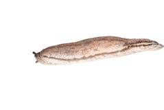 Slug stock photography