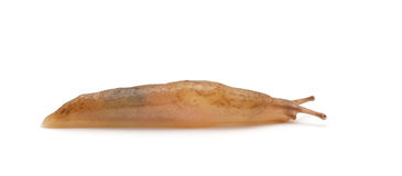 Slug Stock Image