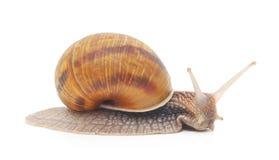 slug Imagem de Stock