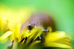 slug Стоковая Фотография