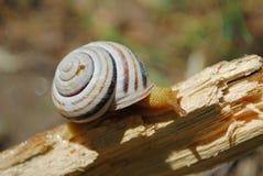 slug Стоковое Изображение RF