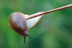 slug Fotografia de Stock