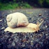 slug Стоковое фото RF