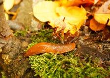 Slug close-up Stock Photos