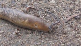 The slug stock video footage