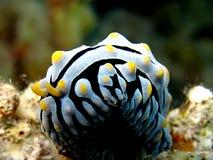 Slug do Wart Fotografia de Stock