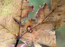 Slug on dry leaf Stock Photo