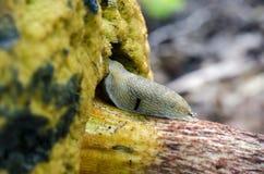 Slug Stock Photo