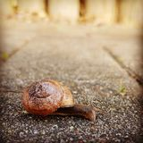 Slug. Goes on a road royalty free stock images