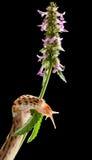 Slug on grass Royalty Free Stock Photography