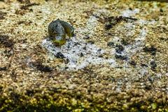 Slug royalty free stock image