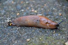 Slug On The Ground stock images