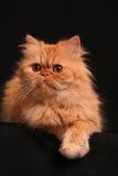 slug katt Royaltyfri Fotografi