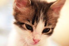 slug kattunge Arkivbilder